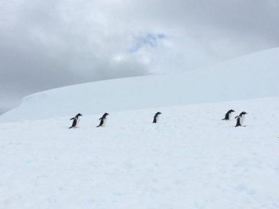 [VIDEO] Antarctica Expedition: Gentoo Penguins Swimming Under the Antarctic Ice