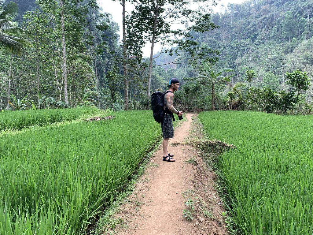 Kapas Biru Rice Field