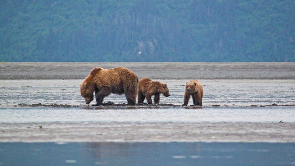 alaska travel guide lake clark national park bears