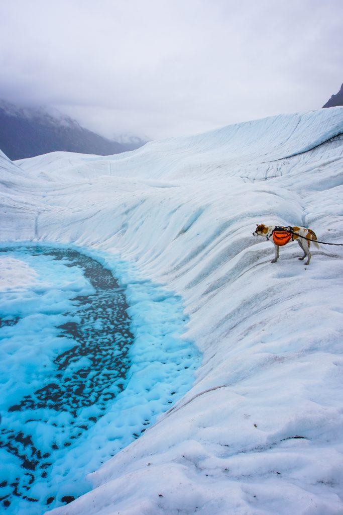 Root Glacier Alaska Dog