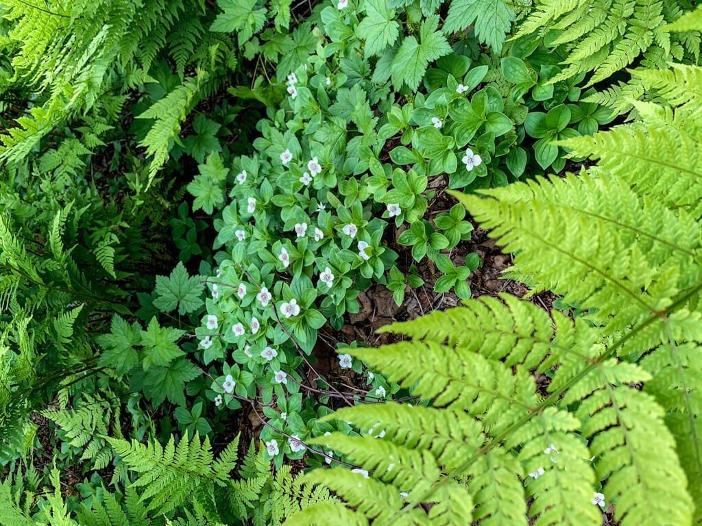 Curry Ridge Wildflowers Alaska