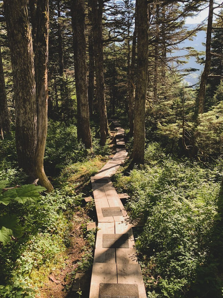 Horsetail Falls Trail Boardwalk Alaska