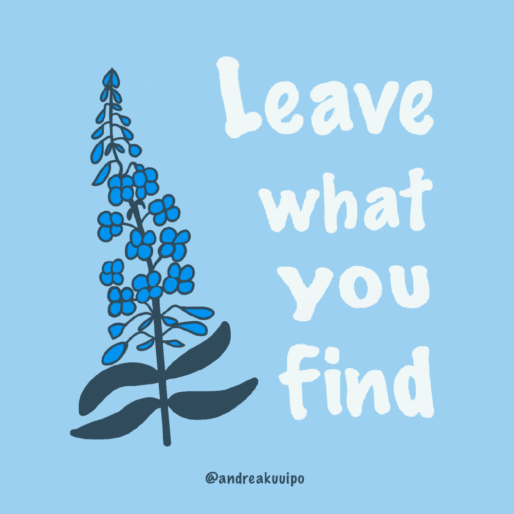 Leave What You Find Leave No Trace Alaska