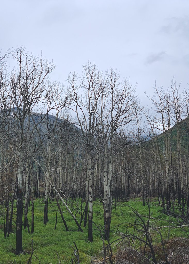 Kenai Peninsula Burn Damage