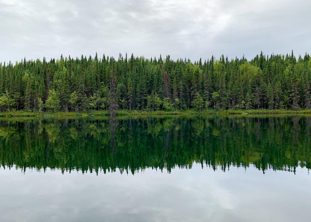 Birch Lake Reflection Swan Lake Trail