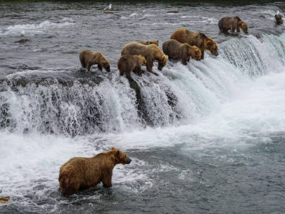 Best Way to Visit Brooks Falls in Katmai National Park: Tips From a Local