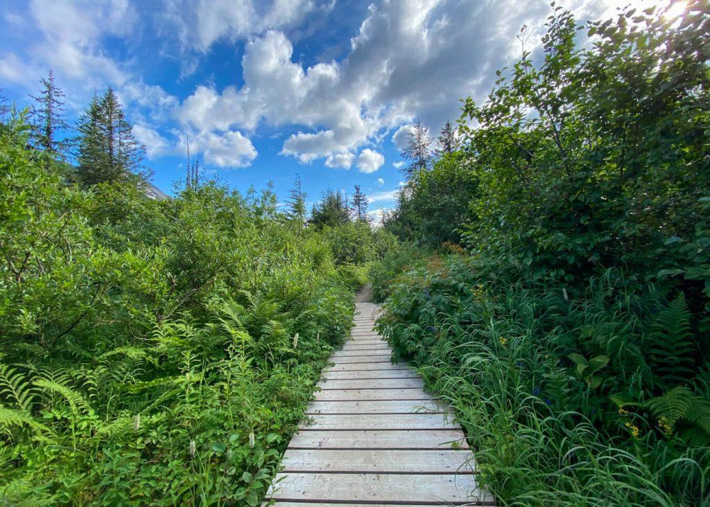 hiking near moose pass alaska