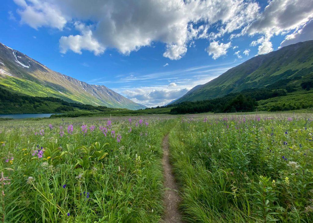hike carter lake trail wildflowers
