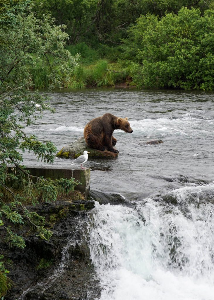best way to visit brooks falls katmai