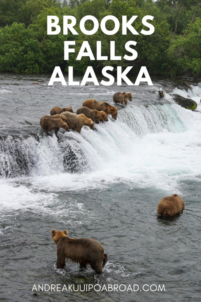 Best Way to Visit Brooks Falls in Katmai National Park Alaska. During July, brown bears fish at Brooks Falls. I counted 29 bears in the area at one time. This is one of the best places for bearviewing in Alaska. #brownbears #travealaska #alaksa #bearviewing